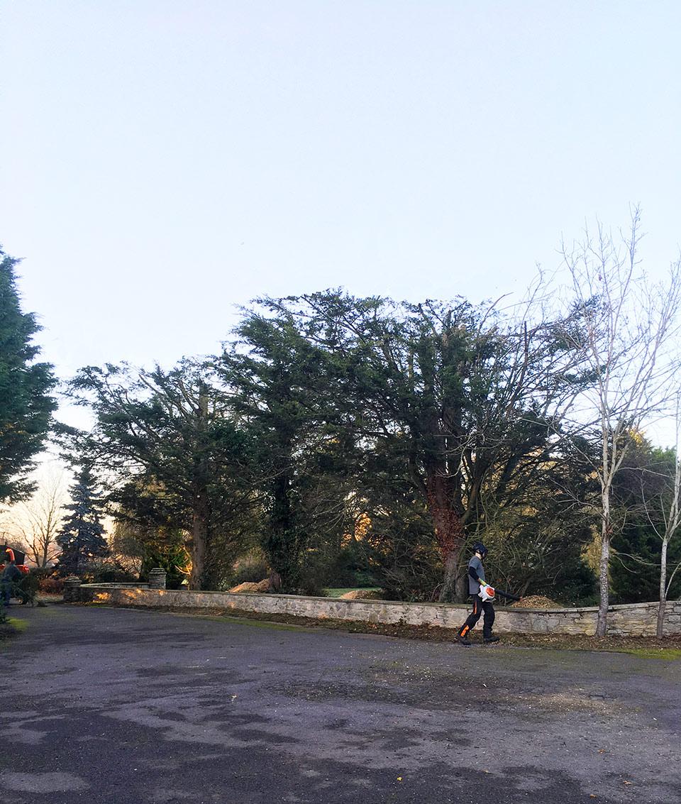 Overgrown Leylandii BEFORE