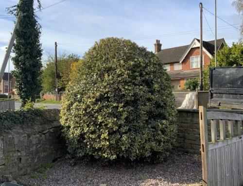Stump Grinding in Kennington Oxford